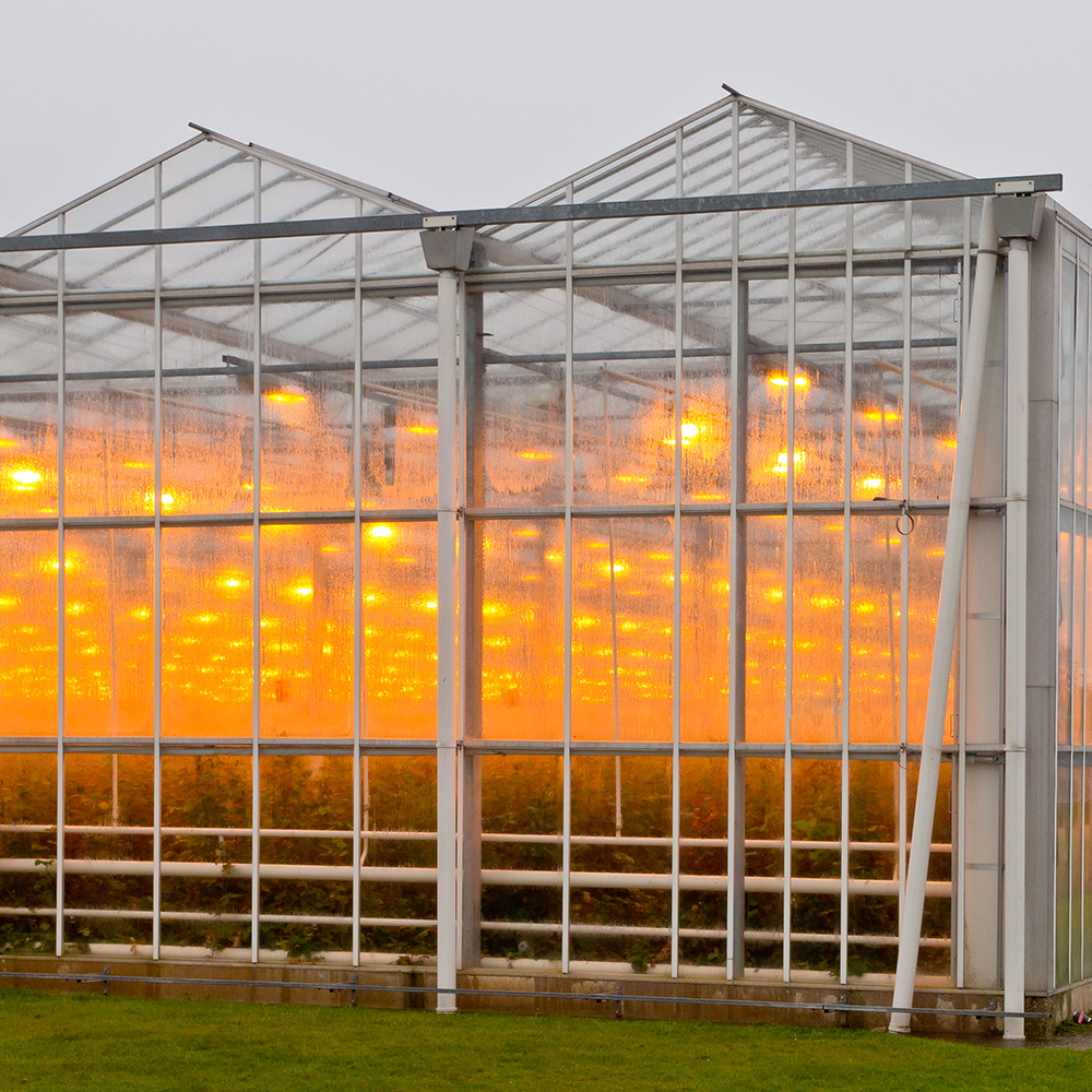 Commercial Grow Lighting System Services  Consult  Design